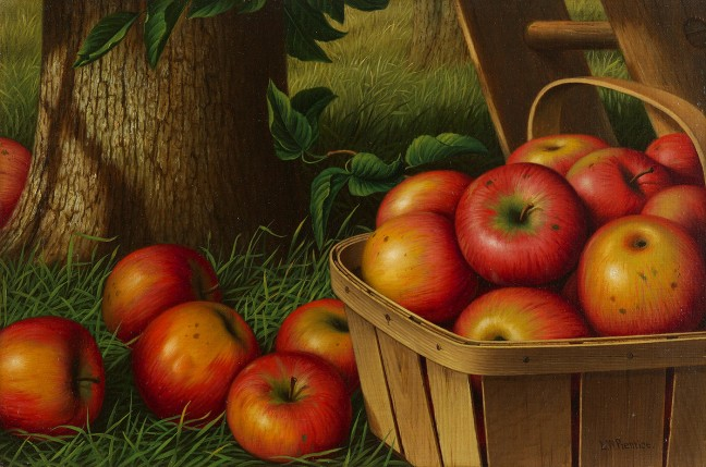 prentice-apples-with-ladder-648x429