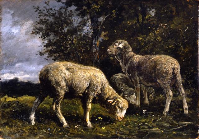 sheepunderatree-jacque96