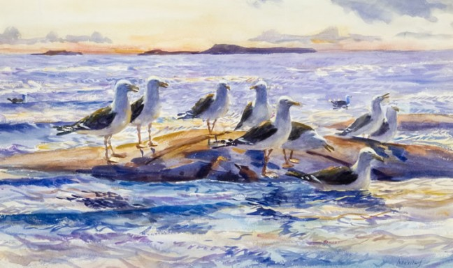 whorf-seagulls-648x384