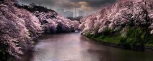 pinkspring