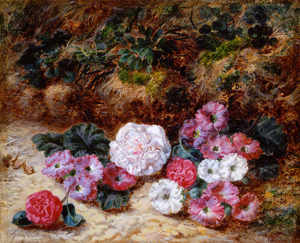 alt Camellias and Primulas