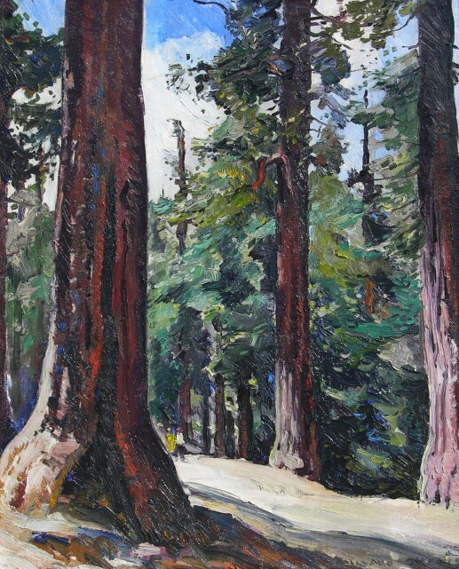 sheetsredwoods