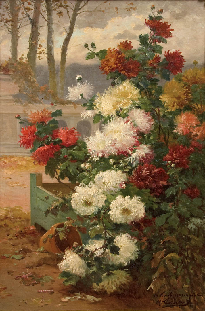 Chrysanthemums Blooming on a Terrace