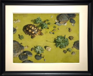 RIPPLE-Tortoise-2002-UF-19X26-f-29X36