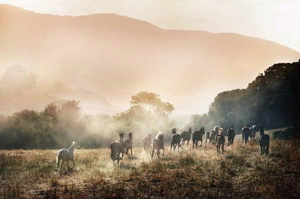 Horses in Paradise