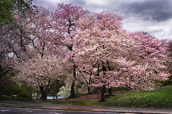 Pink Parkway