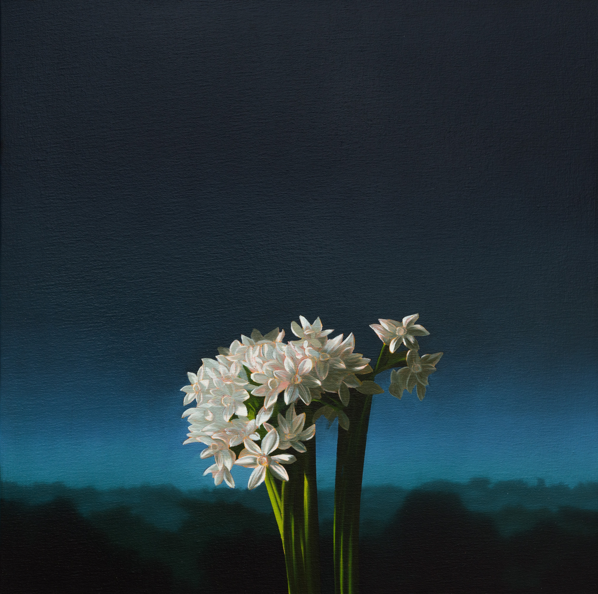 Narcissus Against Evening Sky