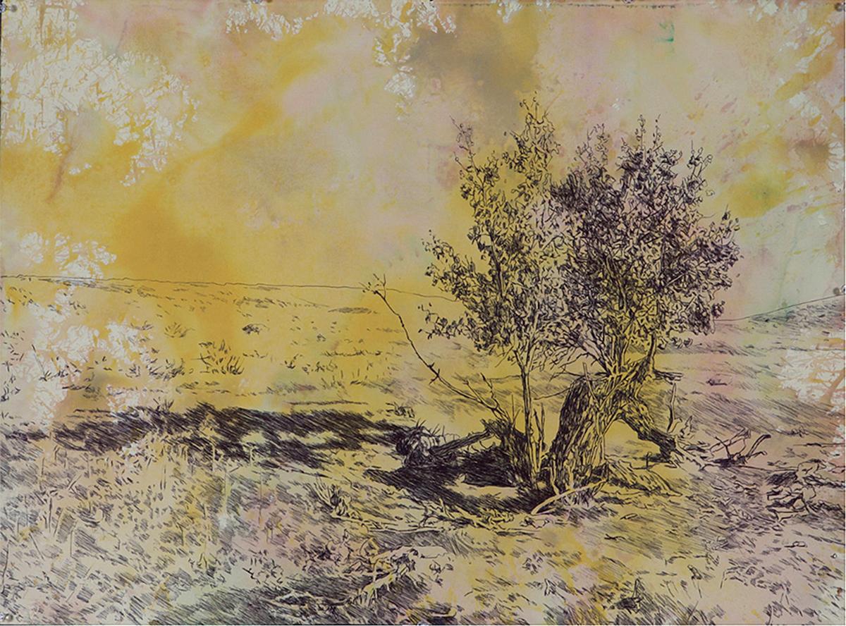 1000 Acres Broken Tree