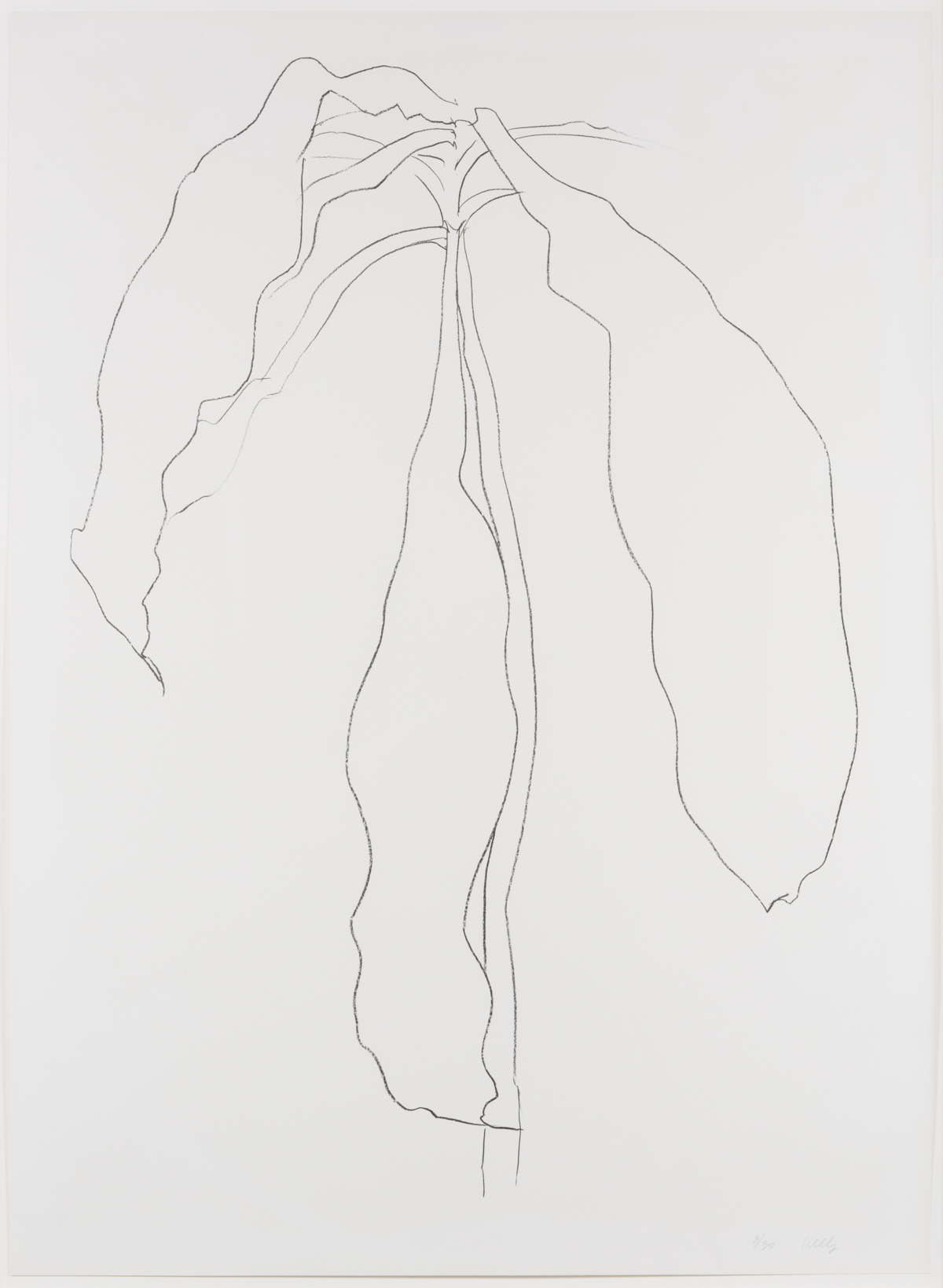 Dracena II, from Series of Plant and Flower Lithographs